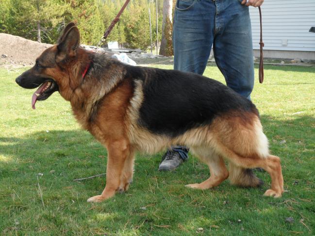Seeing Eye Dogs Adoption Michigan